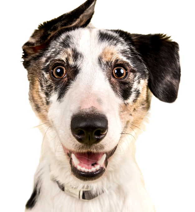 Adopt A Dog Or Cat Today Search For Local Pets In Need Of A Home