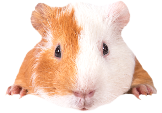 Rabbits Horses Hamsters And More To Adopt And Rescue