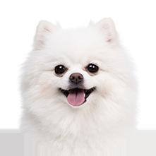 Pet Adoption Agencies &ndash