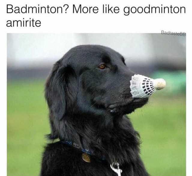 Flat-Coated Retriever Puppies for Sale - Adoptapet com
