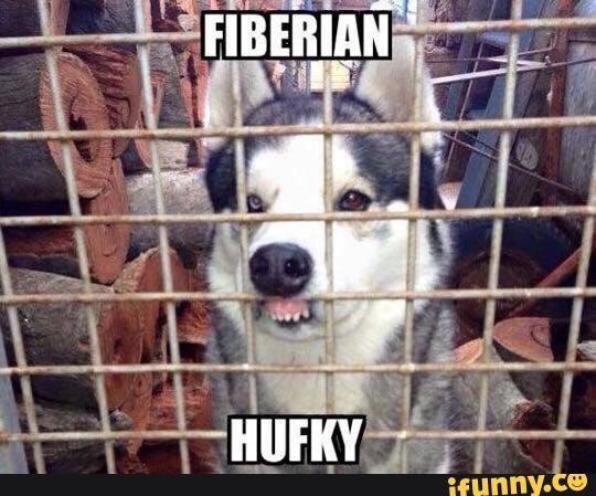 Husky Puppies Dogs