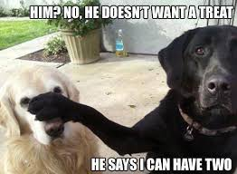 Labrador Retriever Puppies Dogs