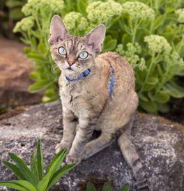 Craigslist Kittens Madison Wi
