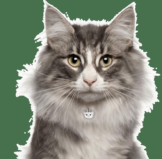 Adopt-a-Pet com