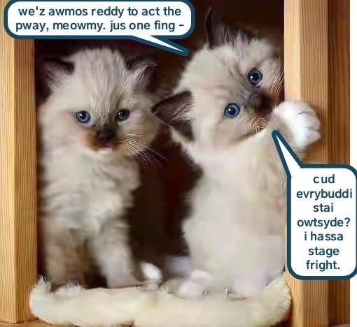 Ragdoll Kittens for Sale - Adoptapet com