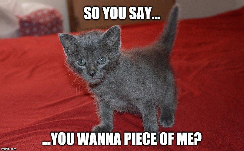 Russian Blue Kittens For Sale Adoptapet Com
